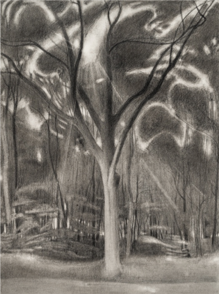 Ron Milewicz, Sun and Oak, 2018, pencil on paper, 18 x 24 inches