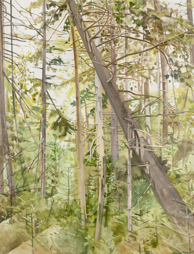 Lois Dodd, Woods with Falling Tree, 1977, oil on linen, 60 x 46 inches (photo by