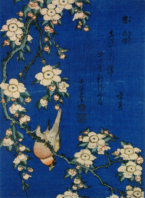 Hokusai, Weeping cherry and bullfinch, colour woodblock, c. 1834 (courtesy of the British Museum)