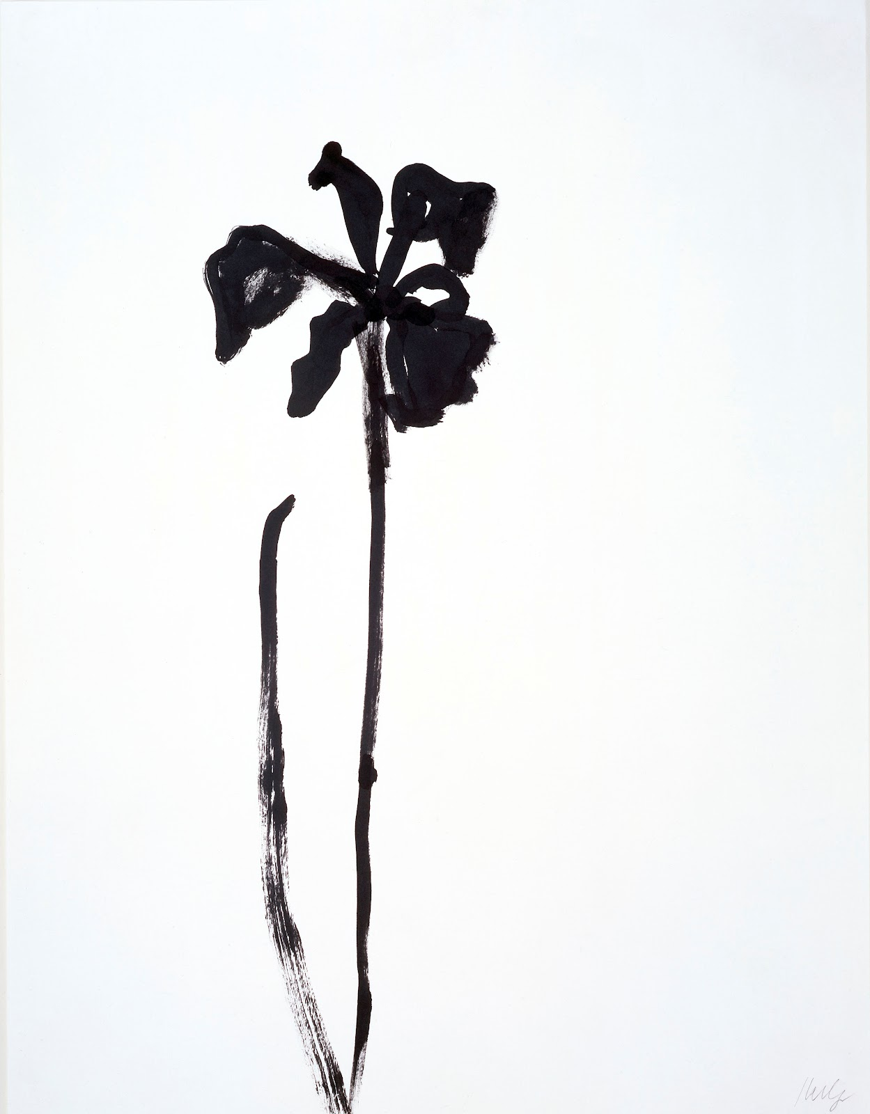 Ellsworth Kelly, Siberian Iris, 1989, ink on paper, 29 3/4 x 23 inches, private