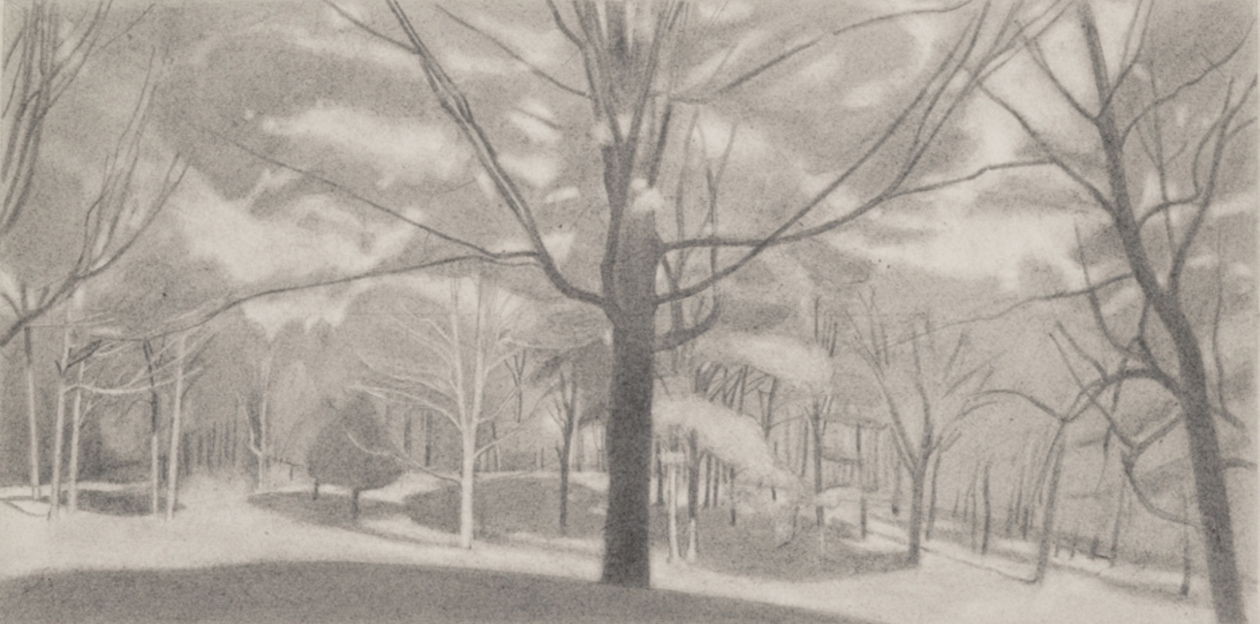 Ron Milewicz, Sugar Maple 2, 2017, pencil on paper, 9 x 18 inches
