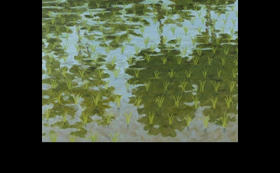 (detail) Robert Berlind, Rice Paddy with Reflected Trees #2, 2012, 36 x 72 inche