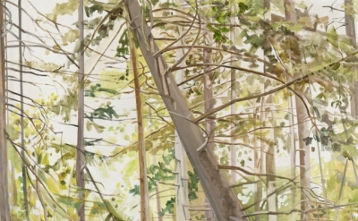 (detail) Lois Dodd, Woods with Falling Tree, 1977, oil on linen, 60 x 46 inches