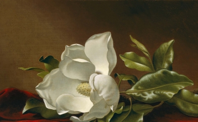 (detail) Martin Johnson Heade, Magnolia Grandiflora, 1885–95, oil on canvas, 15 1/8 x 24 1/8 inches (Photograph © 2016 Museum of Fine Arts, Boston)