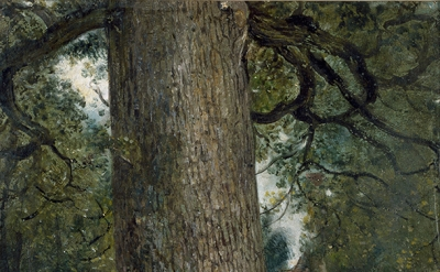 John Constable, Study of the Trunk of an Elm Tree, c. 1824, oil on paper (© Vict