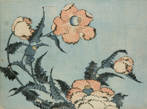 Hokusai, Poppies, colour woodblock, 1831-1832 (courtesy of the British Museum)