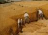 The harvesters pieter bruegel